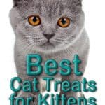 Best Cat Treats for Kittens & Reasons Why You Should Offer Healthy Treats