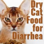 [year] Best Dry Cat Food for Diarrhea: A Healthy Diet For Good Digestion