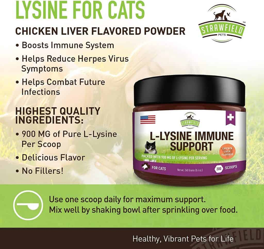 Lysine for Cats - Where to Buy Lysine Powder and Treats? 12