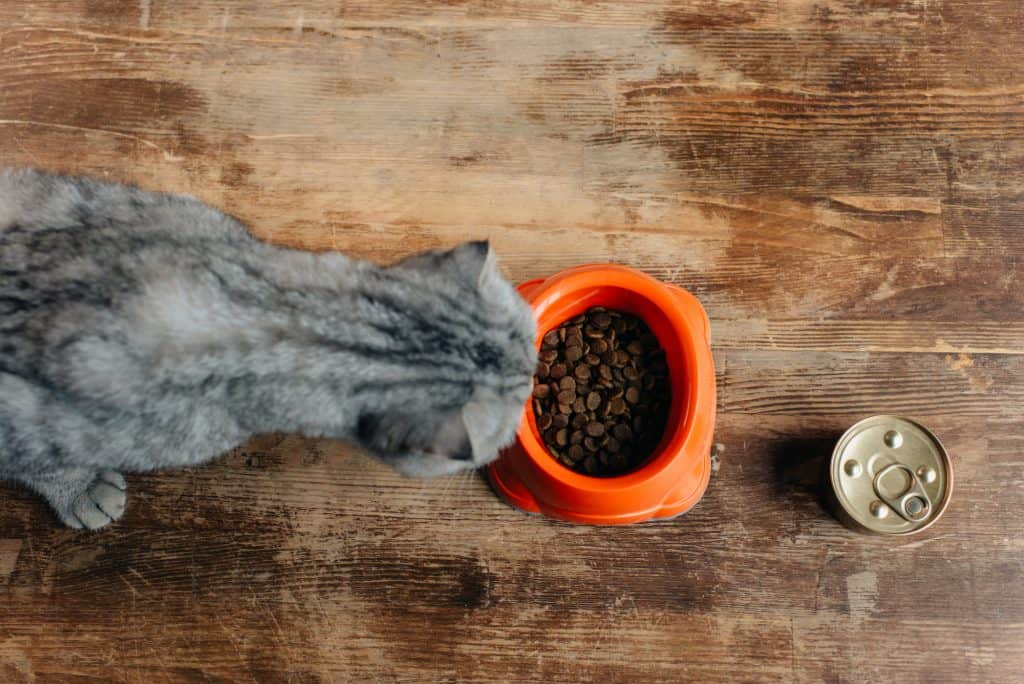 Best Cat Food For Finicky Cats