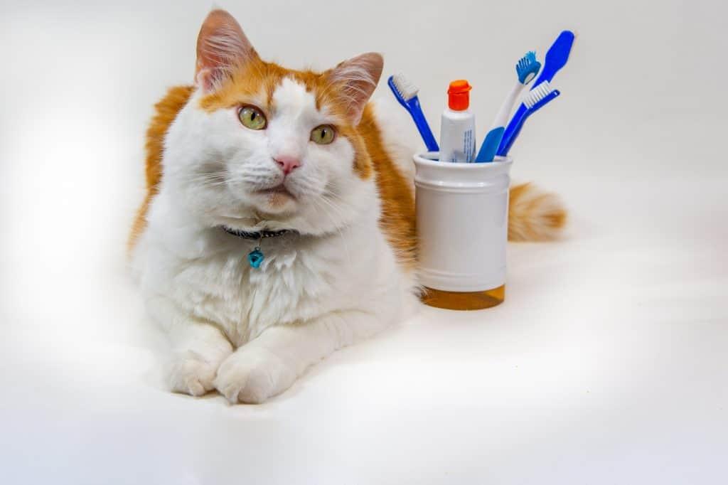 Best Cat Food for Dental Health: A Comprehensive Guide 1