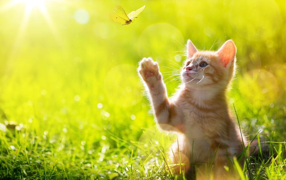 [year] Best Cat Food for Outdoor Cats: Ideal Diet For Adventurous Cats 1