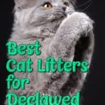 Best Cat Litter for Declawed Cats and What Should You Do If Your Declawed Cat Won't Use His Cat Litter Box?