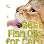 8 Best Fish Oil for Cats and What to Look Out For When Buying Fish Oil Products?