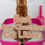 8 Best Non-Clumping Cat Litter in [year]! Should You Use a Non-Clumping Litter for Your Cat?
