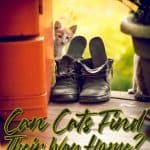 Cat Homing Instinct: Is It For Real? Can Cats Find Their Way Home?