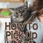 Everything You Need To Know On How To Pick Up A Cat