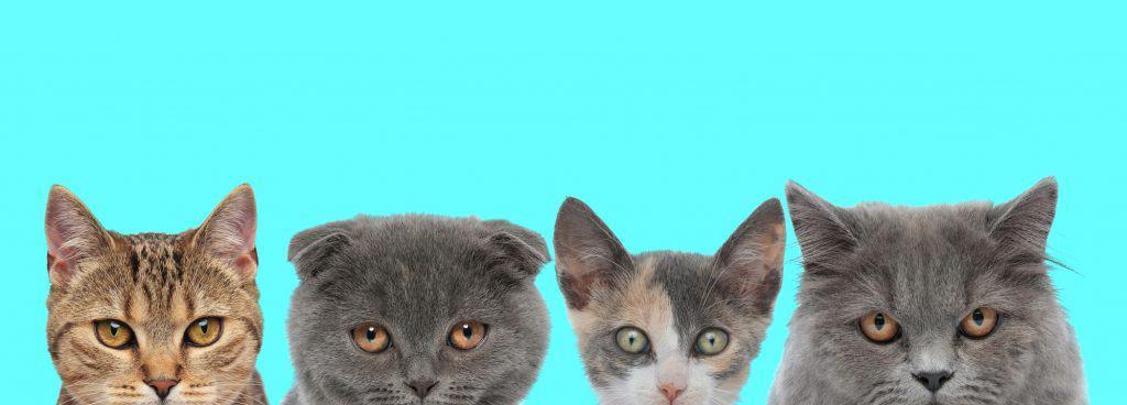 Best Non-Clumping Cat Litter