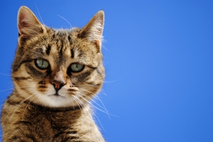 Tips For Living With an Older Cat