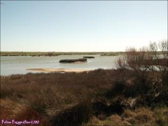 51 - Lagunas de Villafafila5