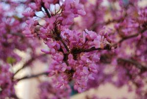 Alicante-Primavera