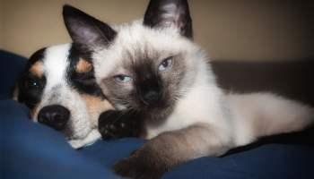 Alma gêmea: Imagem de cachorro e gato.