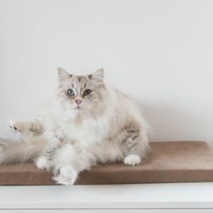 legowisko na parapet dla kota jasny brąz