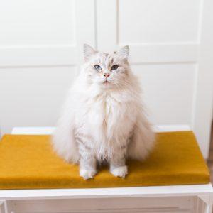 Legowisko na parapet dla kota