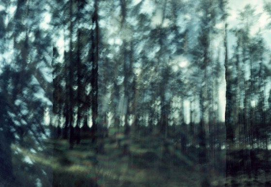 The Woods 04