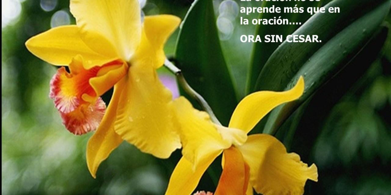 Una mirada penetrante: La oración callada de las flores