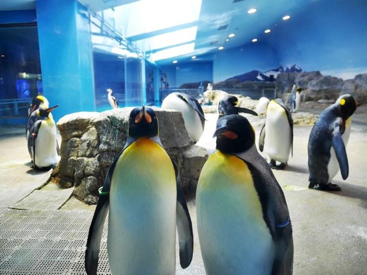 長崎景點 |長崎企鵝水族館~長崎親子遊好地方 門票平價 可預約餵企鵝體驗