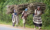 If wealth was the inevitable result of hard work & enterprise, every woman in Africa would be a millionaire - George Monbiot