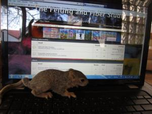 Forumsquirrel