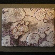 Lichen Rock