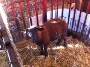 new ram