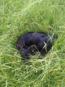 hidden calf