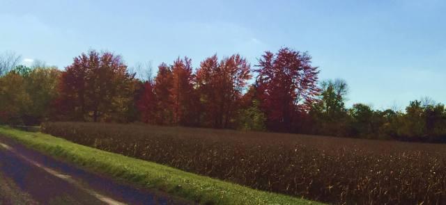 fall-11