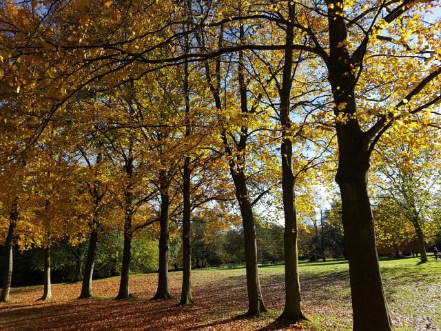 Trees at Mottisfont Abbey