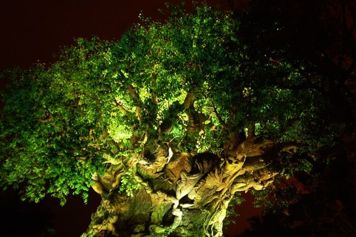 Animal Kingdom - Tree of Life