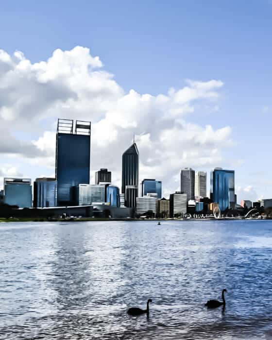 Black swans are native to Perth