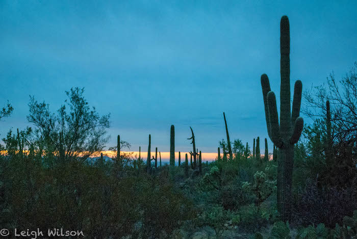 Things to do in Tucson, Saguaro National Park