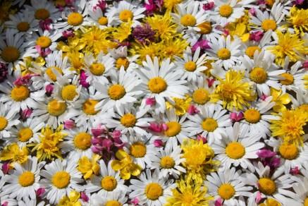 composition florale inspirée..de la beauté!