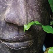 Abnehmen mit der Ayurveda Diaet - Erfahrungen.