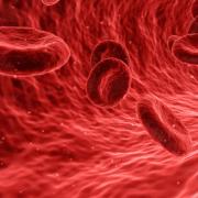 Blutzellen - Blutgruppendiät