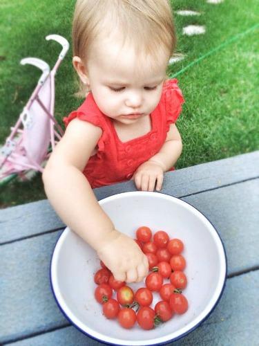 quinn-tomatoes