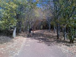 Wes in a pretty tree-lined path at Emmarentia