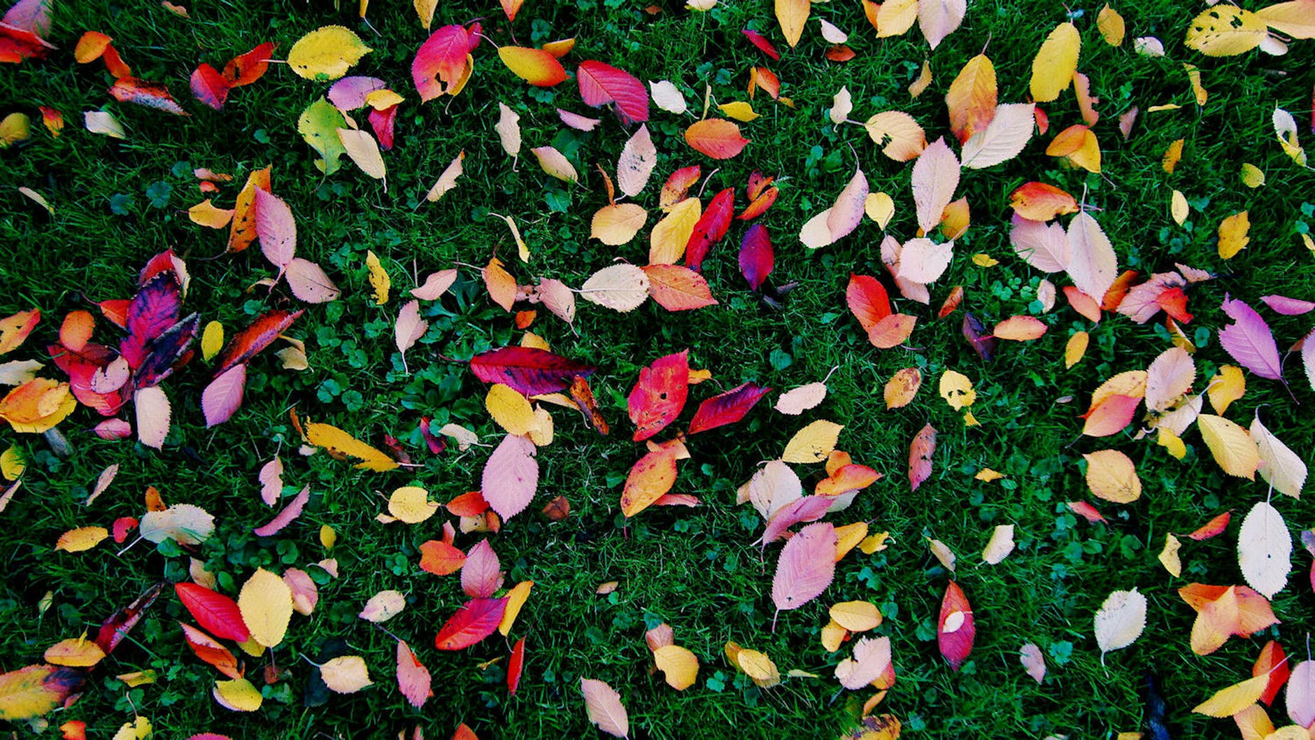 autumn winter health