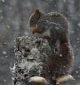 Eggen1_Ekorn i snø.0001