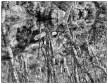 svart-hvitt-12