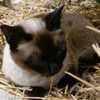 Le Chat, l'ami de la famille et de la maison.