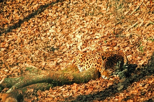 Our Eyes Depend On Movement To Helps Us Hunt And Avoid Predators It Is A