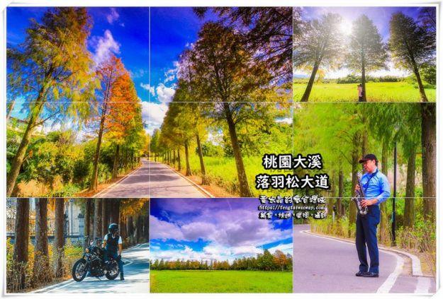 落羽松大道【大溪景點】|桃園落羽松景點季節限定;1公里的漸層鐵鏽色網美景點