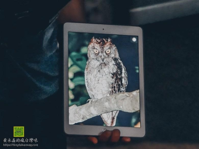蘭嶼夜觀遊程【蘭嶼旅遊】|蘭嶼夜間生態導覽;蘭嶼角鴞、光澤蝸牛、世界最毒生物、無光害觀星 @黃水晶的瘋台灣味