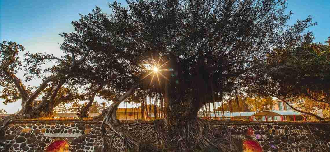 四草砲臺【台南景點】|台江國家公園,安南區國定二級古蹟 @黃水晶的瘋台灣味