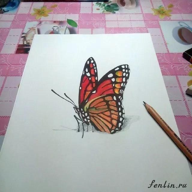 Цветной рисунок карандашом 3D бабочки - Fenlin.ru