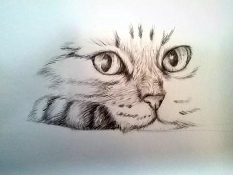 Как нарисовать кота карандашом? Шаг 10. Портреты карандашом - Fenlin.ru