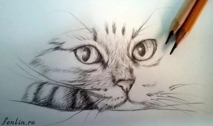 Как нарисовать кота карандашом? Портреты карандашом - Fenlin.ru