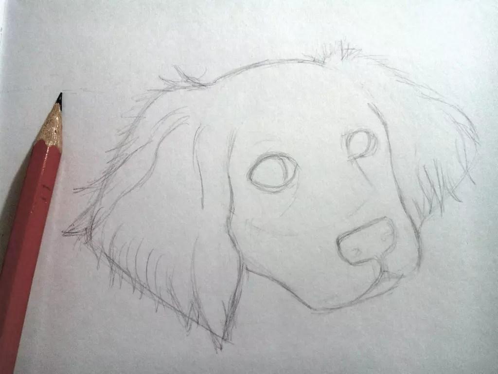 Как нарисовать собаку карандашом? Шаг 5. Портреты карандашом - Fenlin.ru