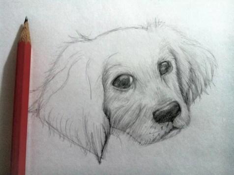 Как нарисовать собаку карандашом? Шаг 8. Портреты карандашом - Fenlin.ru