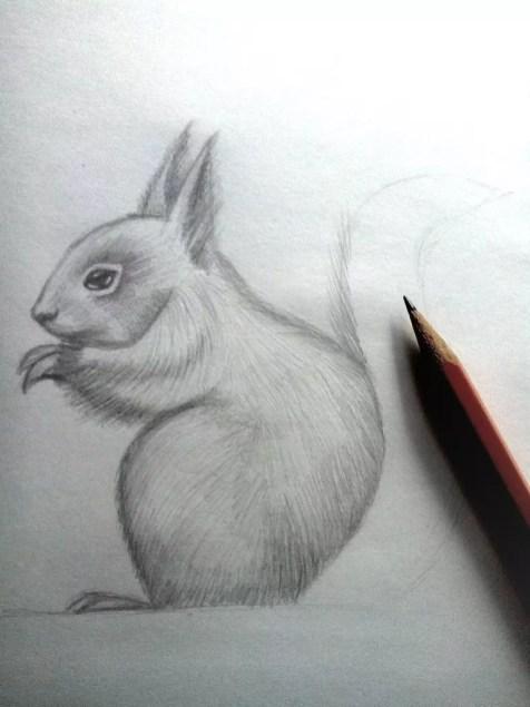 Как нарисовать белку карандашом? Шаг 12. Портреты карандашом - Fenlin.ru